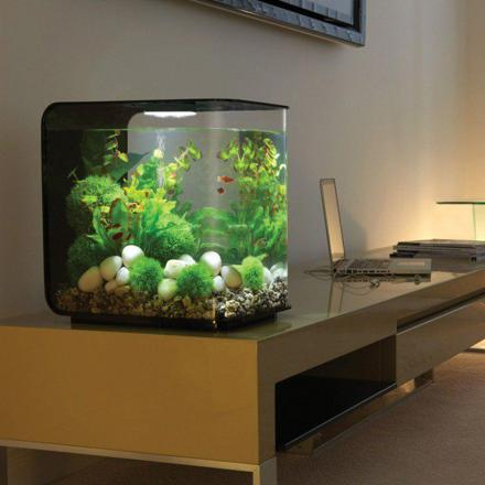 aquarium petit