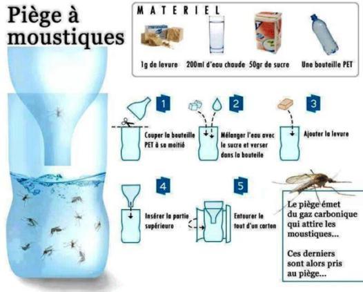 attrape moustique naturel