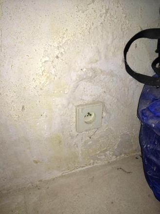 champignon des murs