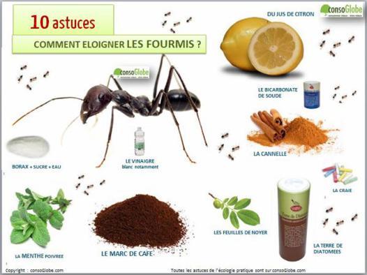 chasser les fourmis