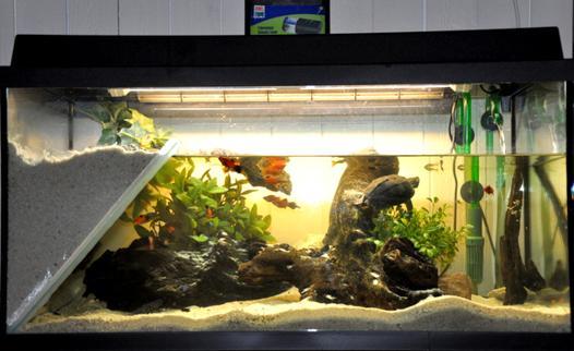 eau pour aquarium