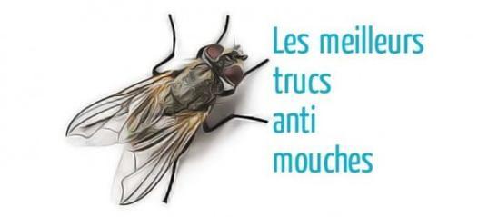 éloigner les mouches