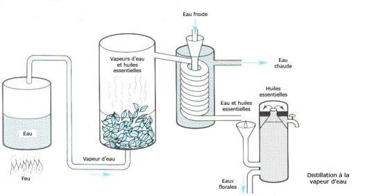 fabriquer son huile essentielle