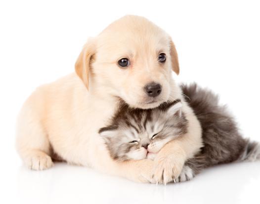 fond ecran chien et chat