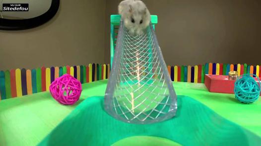 jeux pour hamster