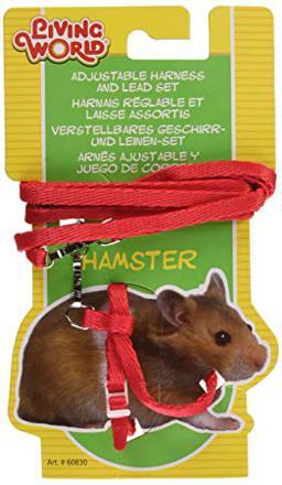 laisse pour hamster