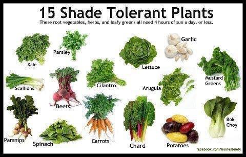 legume ombre