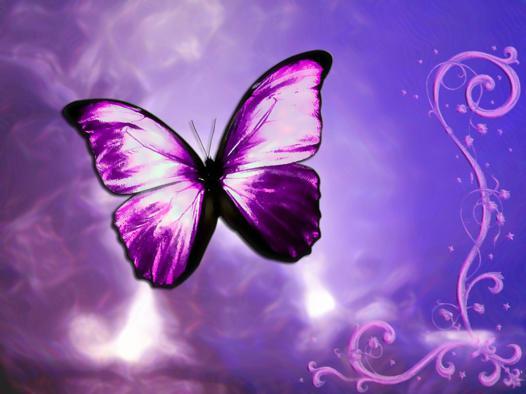 papillon fond d'écran