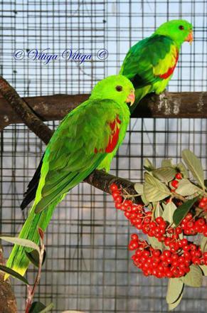 parrot.fr