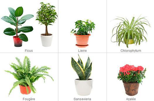 plante contre l humidité