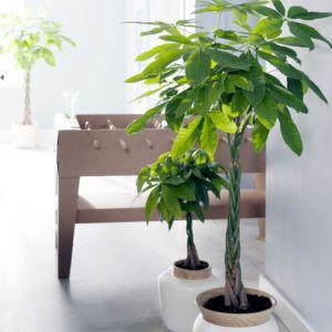 plante pour interieur